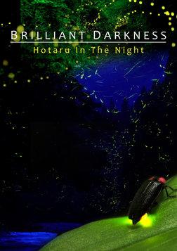 Brilliant Darkness - How Artificial Lights Affect Fireflies
