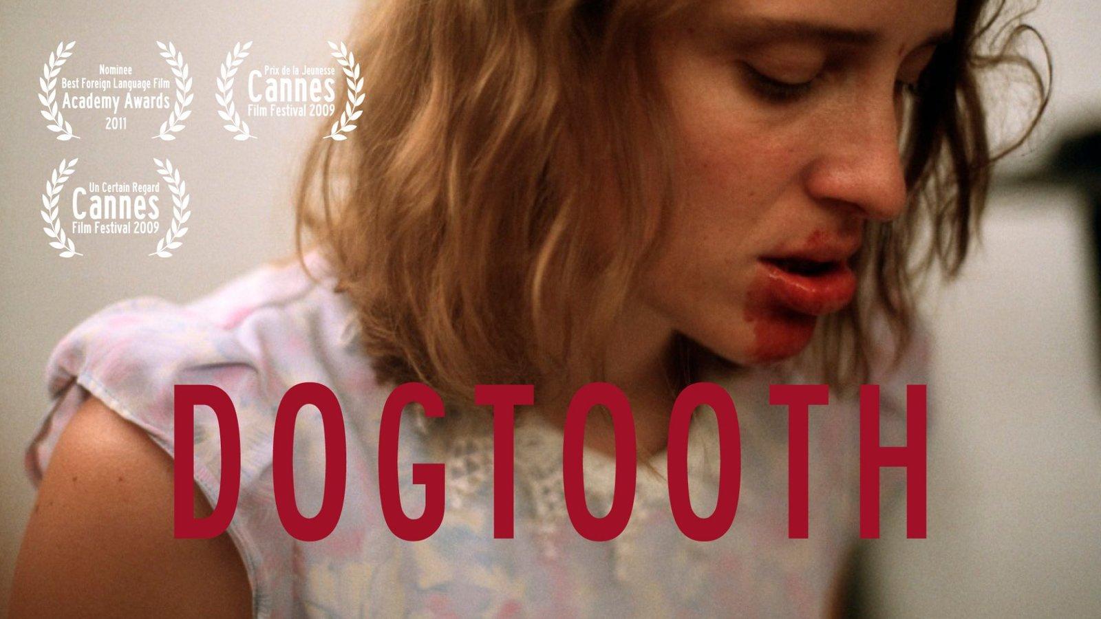 Dogtooth - Kynodontas