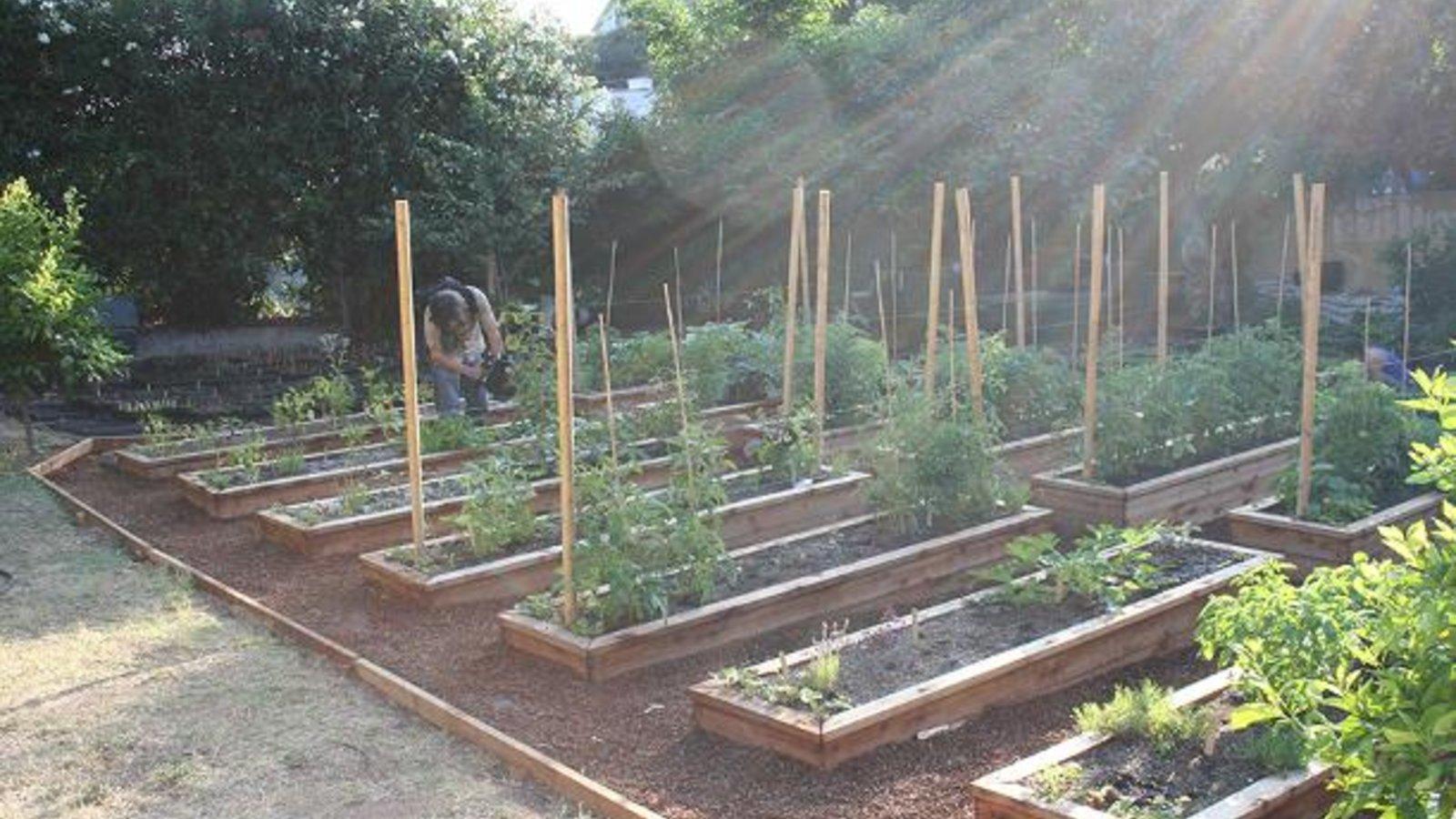 In Organic We Trust - Understanding Organic Food