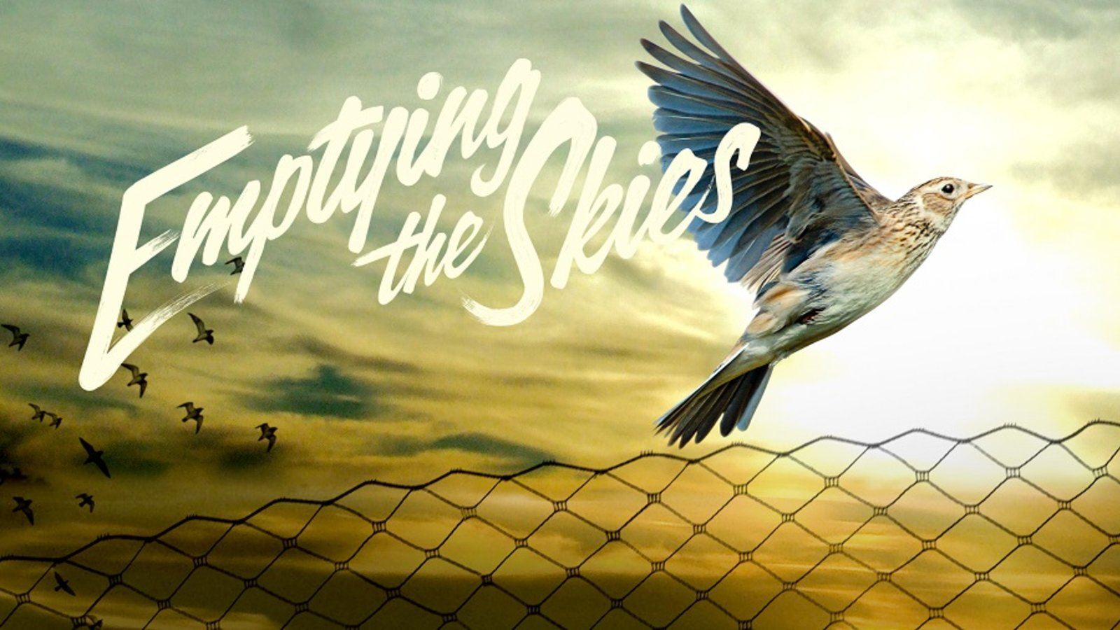 Emptying the Skies - Saving the Songbirds of Southern Europe
