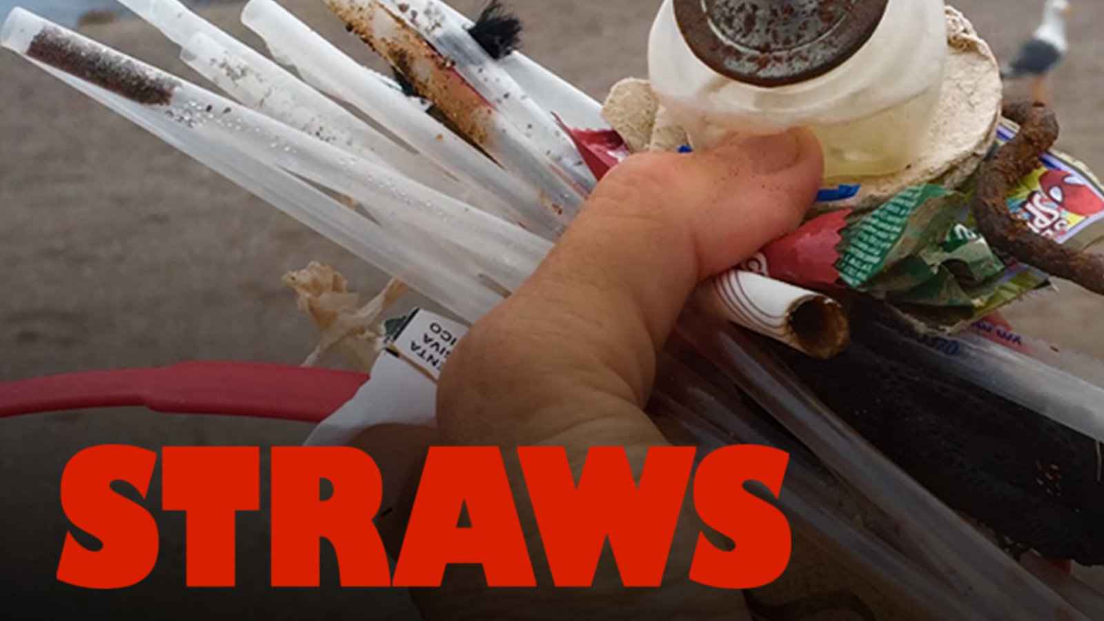 Straws - The Impact of Plastic Straws on our Environment