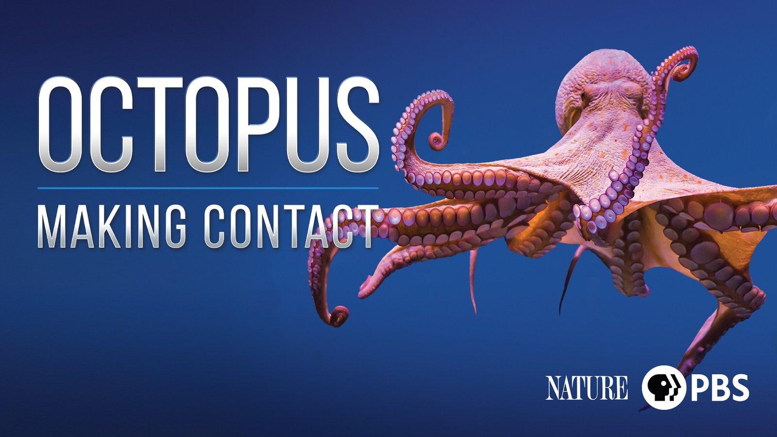 Nature: Octopus - Making Contact