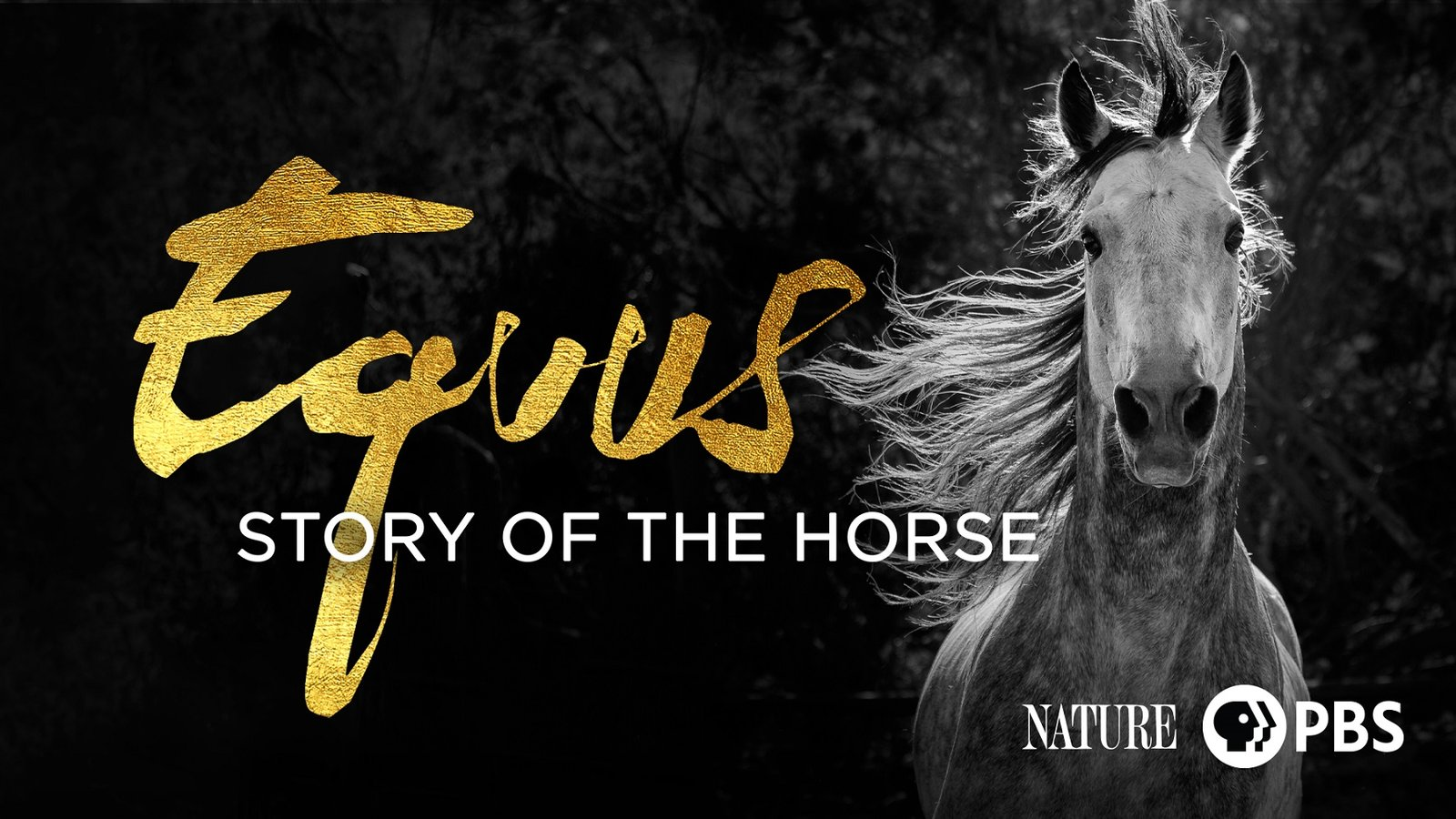 """Nature: Equus """"Story of the Horse"""""""