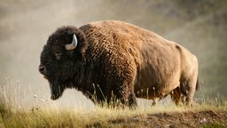 Mythology of the Plains Peoples