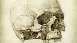 The Figure: Artistic Anatomy
