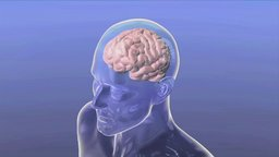 Drugs in the Brain
