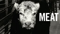 Meat - A Look at the Production of Consumer Meat Products