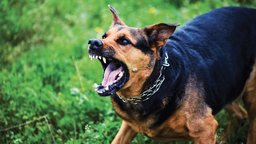 Animals, Blasting, and Strict Liability