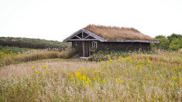 Homesteaders on the Plains