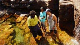 Arafura File Snake - Arnhem Land, Northern Territory