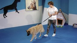 Impulse Control: Leave It, Wait, Leash Walking