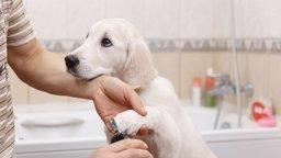 Husbandry: Limb Handling and Toothbrushing