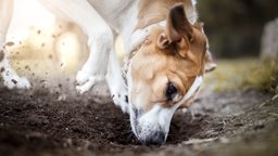 Housetraining, Chewing, and Digging