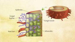 Living Soils: Bacteria and Fungi