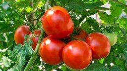 Creating Safe Food Gardens