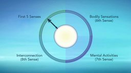 The Wheel of Awareness: A Model for Well-Being