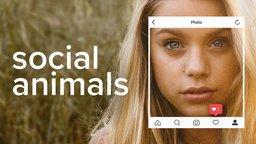 Social Animals - The Real and Digital Worlds of Today's Teenagers